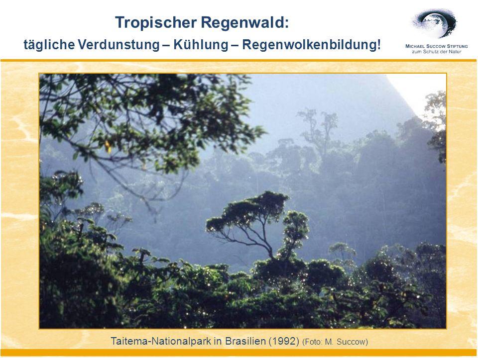 Tropischer Regenwald: tägliche Verdunstung – Kühlung – Regenwolkenbildung! Taitema-Nationalpark in Brasilien (1992) (Foto: M. Succow)