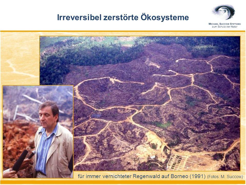 für immer vernichteter Regenwald auf Borneo (1991) (Fotos: M. Succow) Irreversibel zerstörte Ökosysteme