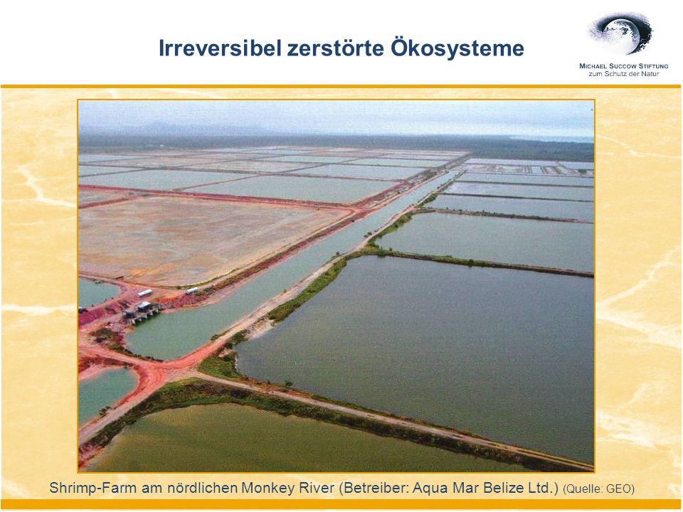 Shrimp-Farm am nördlichen Monkey River (Betreiber: Aqua Mar Belize Ltd.) (Quelle: GEO) Irreversibel zerstörte Ökosysteme