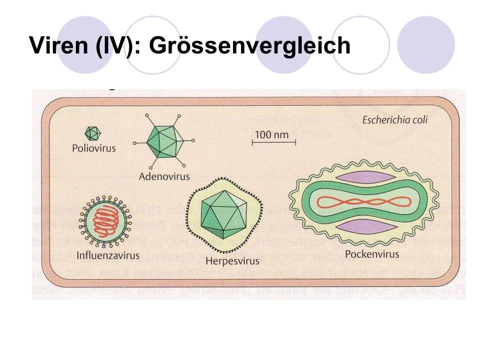 Viren (IV): Grössenvergleich