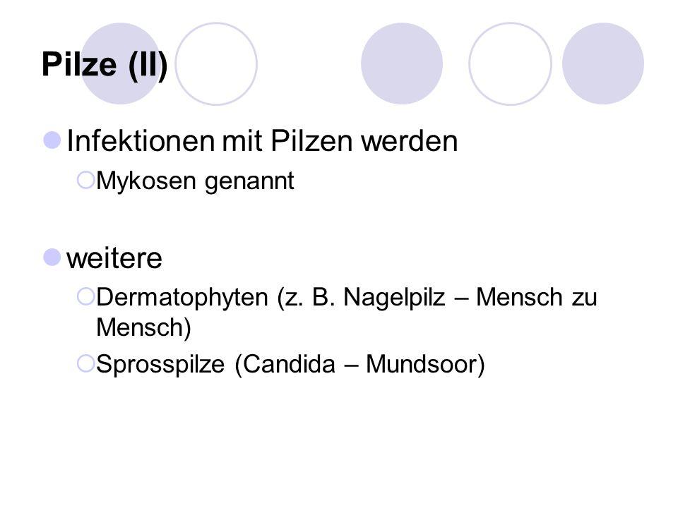Pilze (II) Infektionen mit Pilzen werden  Mykosen genannt weitere  Dermatophyten (z.