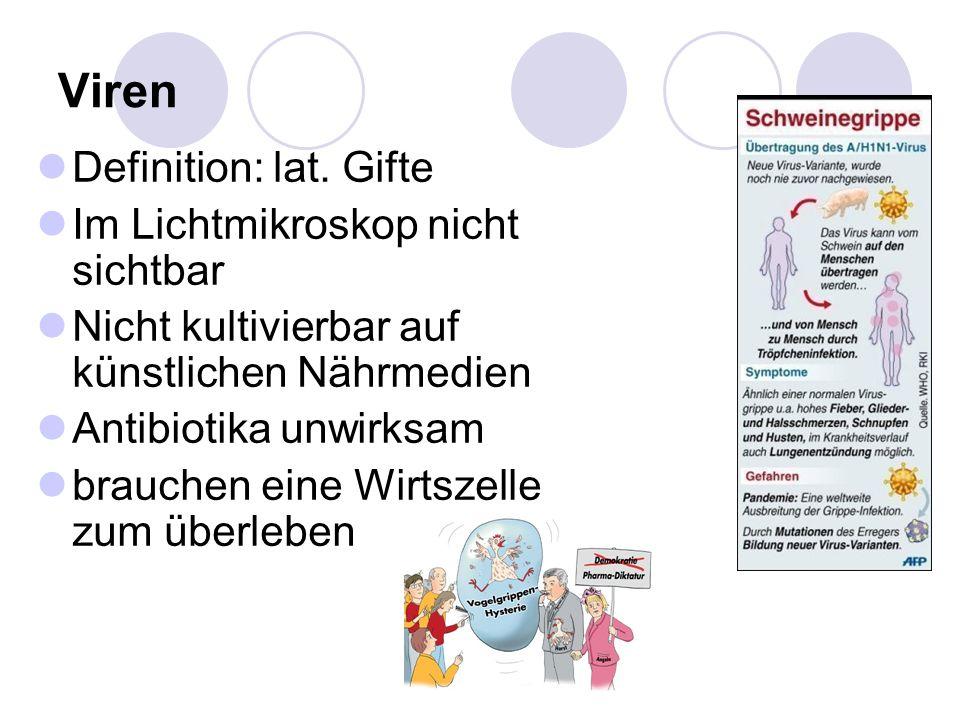 Viren (III) Schematischer Aufbau
