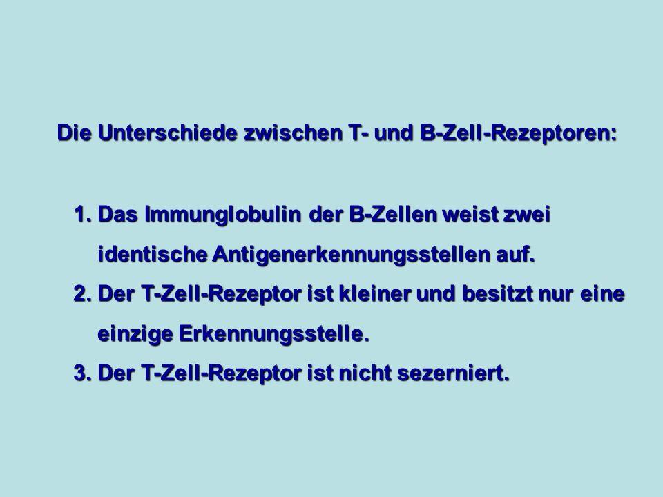 Die Unterschiede zwischen T- und B-Zell-Rezeptoren: 1.