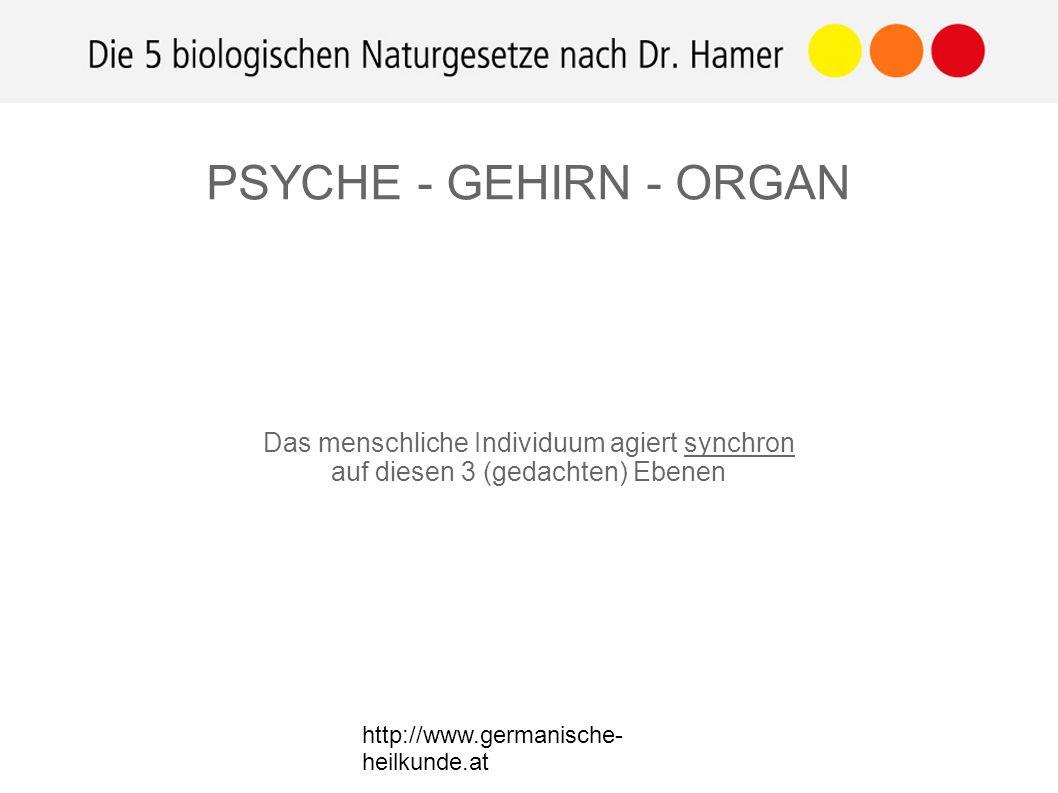 http://www.germanische- heilkunde.at Das menschliche Individuum agiert synchron auf diesen 3 (gedachten) Ebenen PSYCHE - GEHIRN - ORGAN
