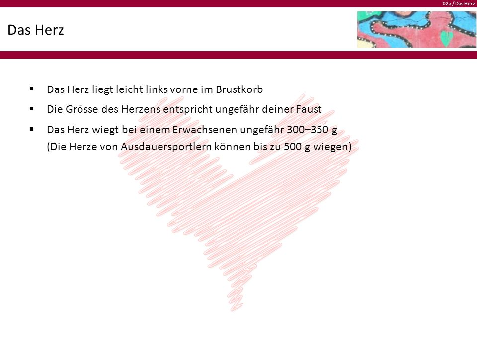02a / Das Herz Das Herz  Das Herz liegt leicht links vorne im Brustkorb  Die Grösse des Herzens entspricht ungefähr deiner Faust  Das Herz wiegt bei einem Erwachsenen ungefähr 300–350 g (Die Herze von Ausdauersportlern können bis zu 500 g wiegen)