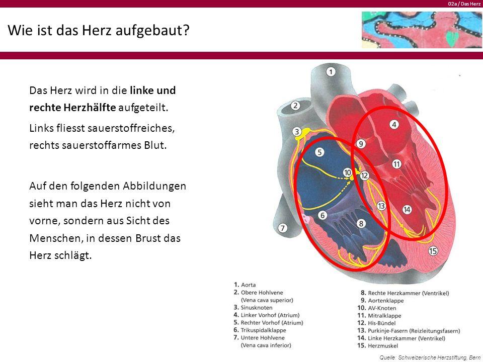 02a / Das Herz Wie ist das Herz aufgebaut.