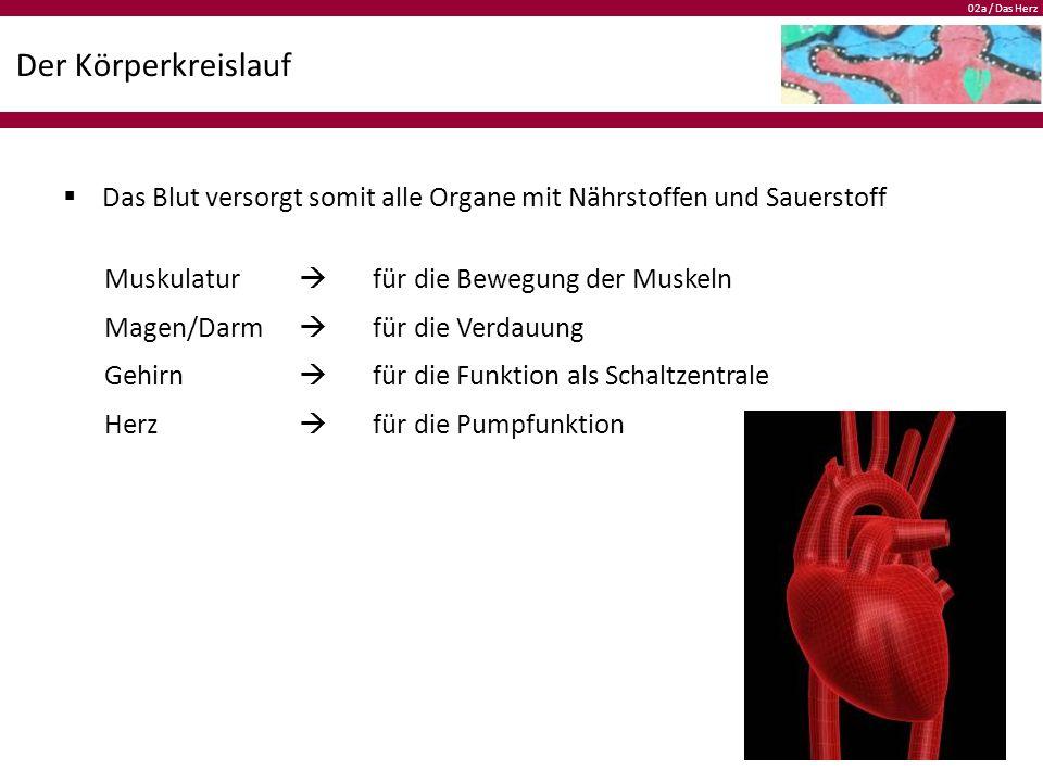 02a / Das Herz Der Körperkreislauf  Das Blut versorgt somit alle Organe mit Nährstoffen und Sauerstoff Muskulatur  für die Bewegung der Muskeln Magen/Darm  für die Verdauung Gehirn  für die Funktion als Schaltzentrale Herz  für die Pumpfunktion