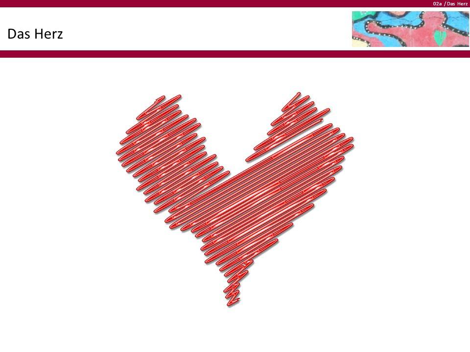 02a / Das Herz Das Herz  Das Herz liegt leicht links vorne im Brustkorb  Die Grösse des Herzens entspricht ungefähr deiner Faust  Das Herz wiegt bei einem Erwachsenen ungefähr 300–350 Gramm (Die Herzen von Ausdauersportlern können bis zu 500 g wiegen)