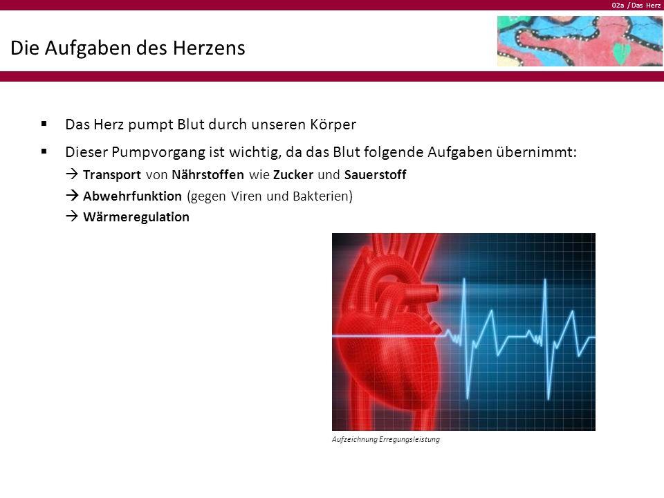 02a / Das Herz Die Aufgaben des Herzens  Das Herz pumpt Blut durch unseren Körper  Dieser Pumpvorgang ist wichtig, da das Blut folgende Aufgaben übe