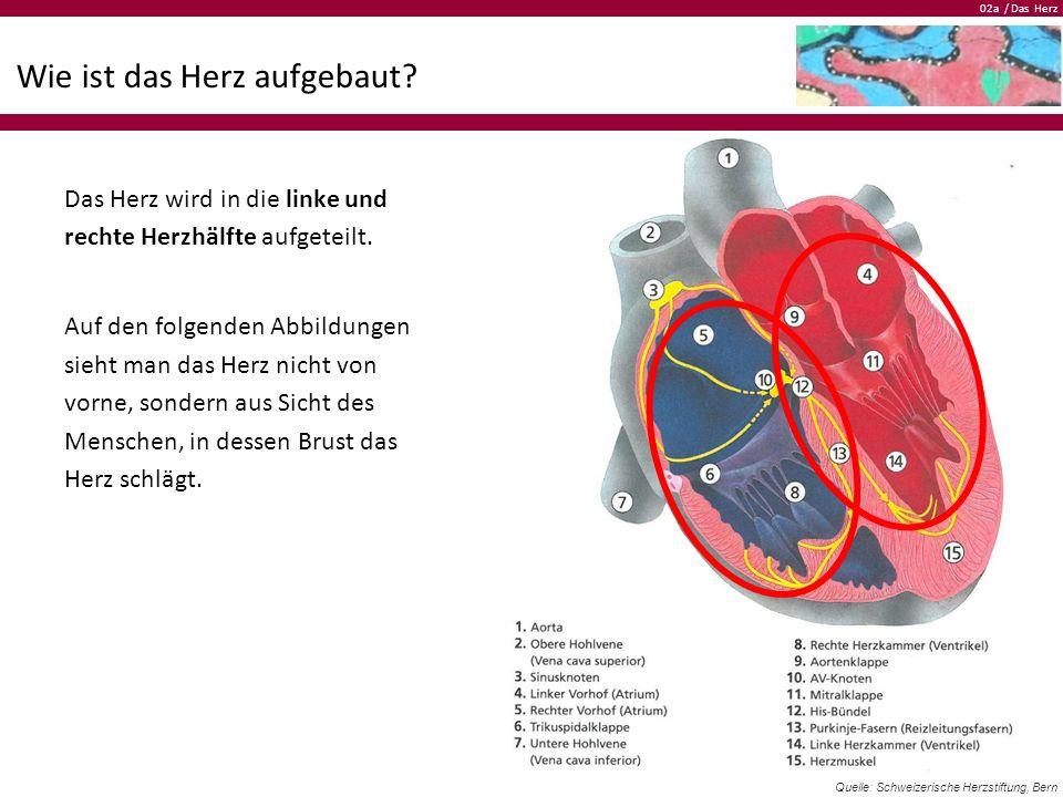 02a / Das Herz Wie ist das Herz aufgebaut? Das Herz wird in die linke und rechte Herzhälfte aufgeteilt. Auf den folgenden Abbildungen sieht man das He