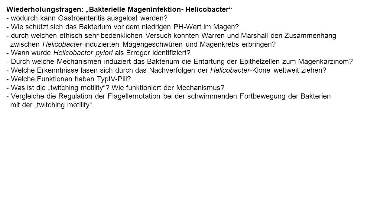 """Wiederholungsfragen: """"Bakterielle Mageninfektion- Helicobacter - wodurch kann Gastroenteritis ausgelöst werden."""
