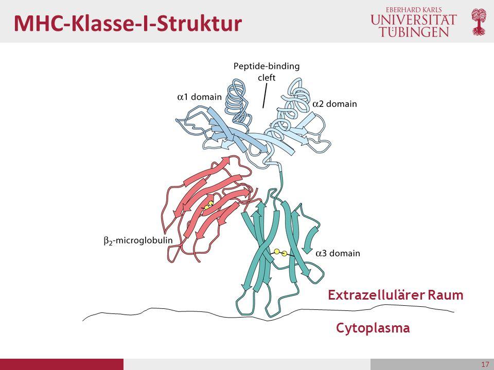 MHC-Klasse-I-Struktur Cytoplasma Extrazellulärer Raum 17