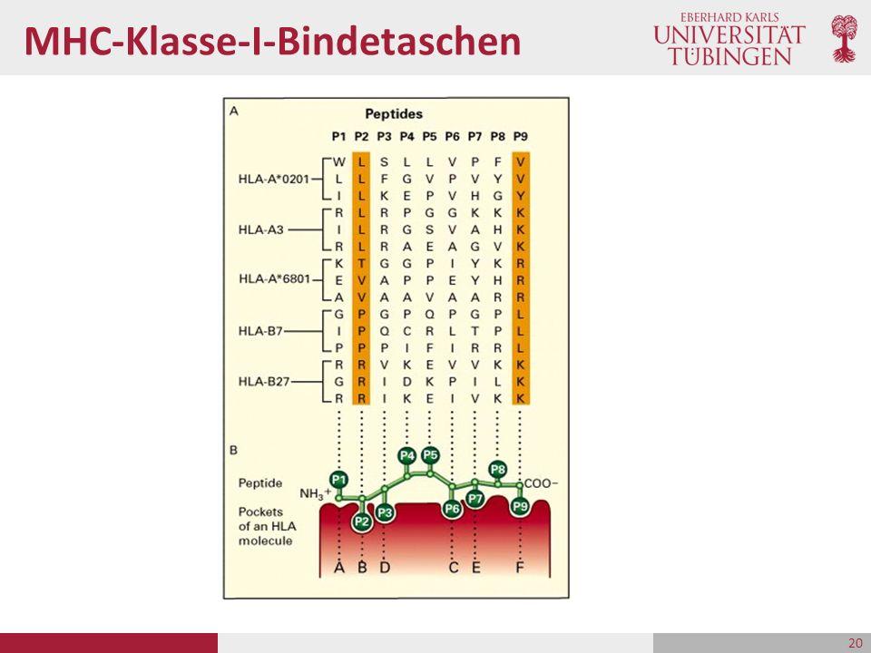 MHC-Klasse-I-Bindetaschen 20