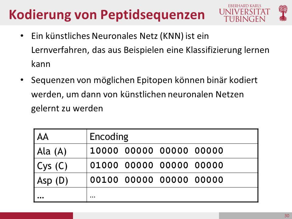 Kodierung von Peptidsequenzen Ein künstliches Neuronales Netz (KNN) ist ein Lernverfahren, das aus Beispielen eine Klassifizierung lernen kann Sequenzen von möglichen Epitopen können binär kodiert werden, um dann von künstlichen neuronalen Netzen gelernt zu werden AAEncoding Ala (A) 10000 00000 00000 00000 Cys (C) 01000 00000 00000 00000 Asp (D) 00100 00000 00000 00000 … … 30