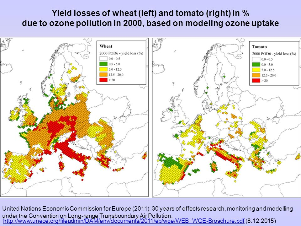 Yield losses of wheat (left) and tomato (right) in % due to ozone pollution in 2000, based on modeling ozone uptake http://www.unece.org/fileadmin/DAM/env/documents/2011/eb/wge/WEB_WGE-Broschure.pdfhttp://www.unece.org/fileadmin/DAM/env/documents/2011/eb/wge/WEB_WGE-Broschure.pdf (8.12.2015) United Nations Economic Commission for Europe (2011): 30 years of effects research, monitoring and modelling under the Convention on Long-range Transboundary Air Pollution.