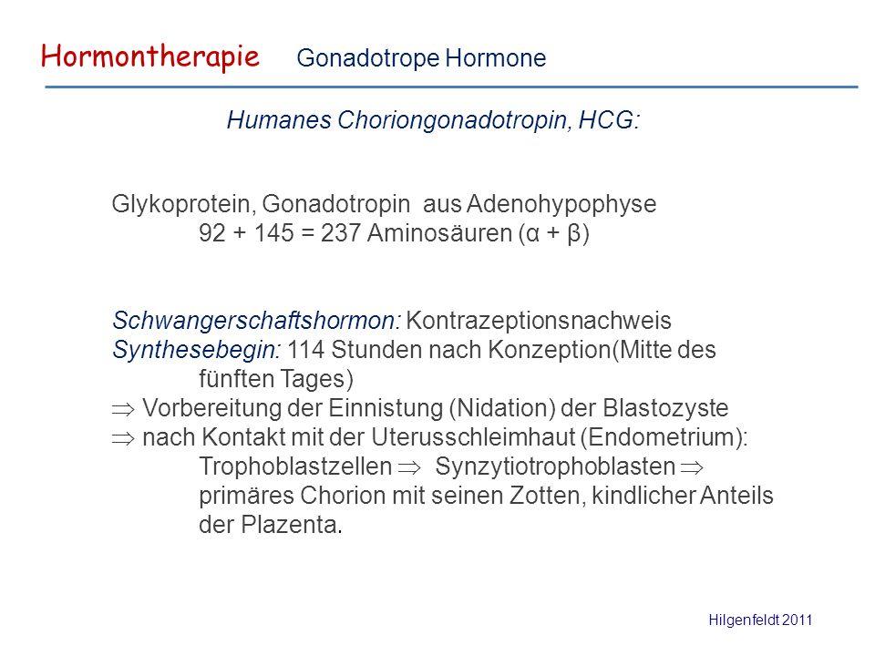 Hormontherapie Hilgenfeldt 2011 Gonadotrope Hormone Glykoprotein, Gonadotropin aus Adenohypophyse 92 + 145 = 237 Aminosäuren (α + β) Schwangerschaftshormon: Kontrazeptionsnachweis Synthesebegin: 114 Stunden nach Konzeption(Mitte des fünften Tages)  Vorbereitung der Einnistung (Nidation) der Blastozyste  nach Kontakt mit der Uterusschleimhaut (Endometrium): Trophoblastzellen  Synzytiotrophoblasten  primäres Chorion mit seinen Zotten, kindlicher Anteils der Plazenta.