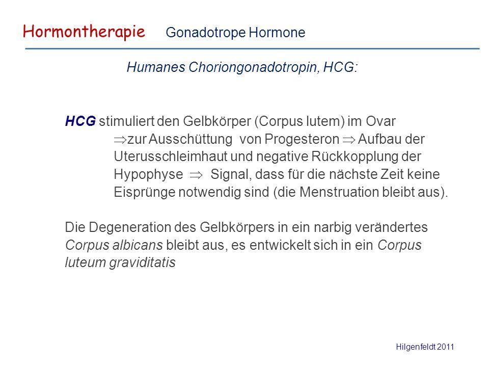 Hormontherapie Hilgenfeldt 2011 Gonadotrope Hormone HCG stimuliert den Gelbkörper (Corpus lutem) im Ovar  zur Ausschüttung von Progesteron  Aufbau der Uterusschleimhaut und negative Rückkopplung der Hypophyse  Signal, dass für die nächste Zeit keine Eisprünge notwendig sind (die Menstruation bleibt aus).