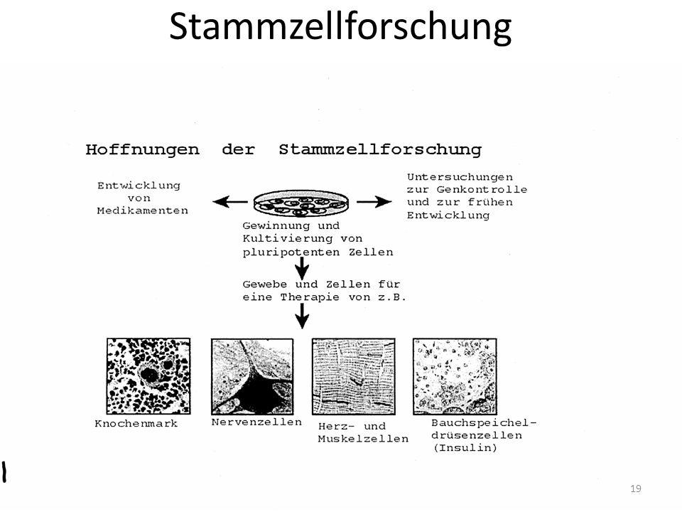 Stammzellforschung 19