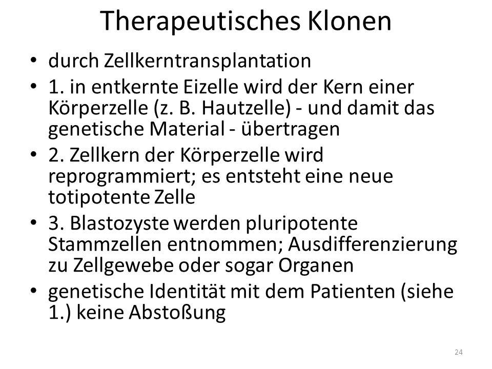 Therapeutisches Klonen durch Zellkerntransplantation 1.