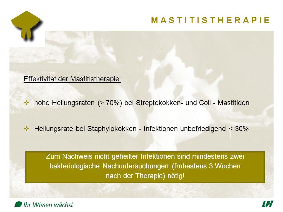 M A S T I T I S T H E R A P I E Effektivität der Mastitistherapie:  hohe Heilungsraten (> 70%) bei Streptokokken- und Coli - Mastitiden  Heilungsrate bei Staphylokokken - Infektionen unbefriedigend < 30% Zum Nachweis nicht geheilter Infektionen sind mindestens zwei bakteriologische Nachuntersuchungen (frühestens 3 Wochen nach der Therapie) nötig!