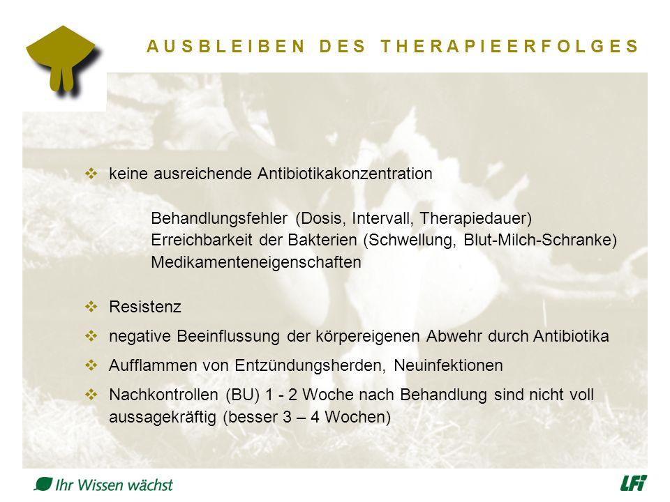 A U S B L E I B E N D E S T H E R A P I E E R F O L G E S  keine ausreichende Antibiotikakonzentration Behandlungsfehler (Dosis, Intervall, Therapied