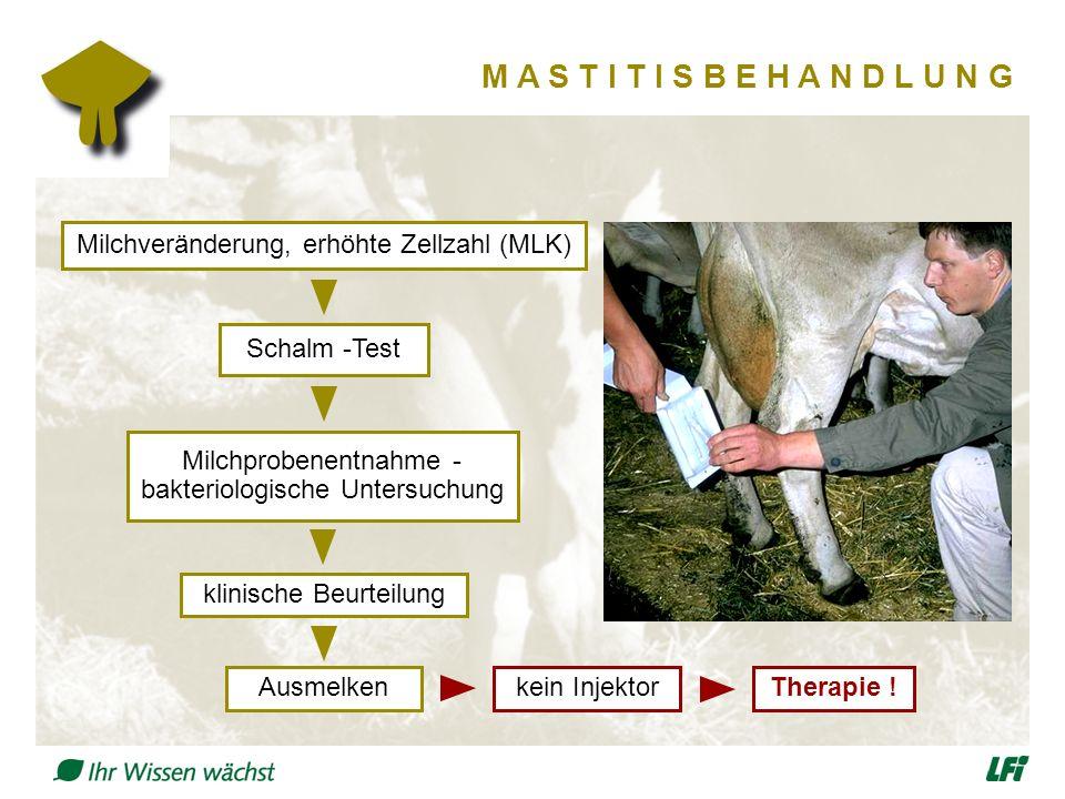 M A S T I T I S B E H A N D L U N G Milchprobenentnahme - bakteriologische Untersuchung Schalm -Test Milchveränderung, erhöhte Zellzahl (MLK) Therapie