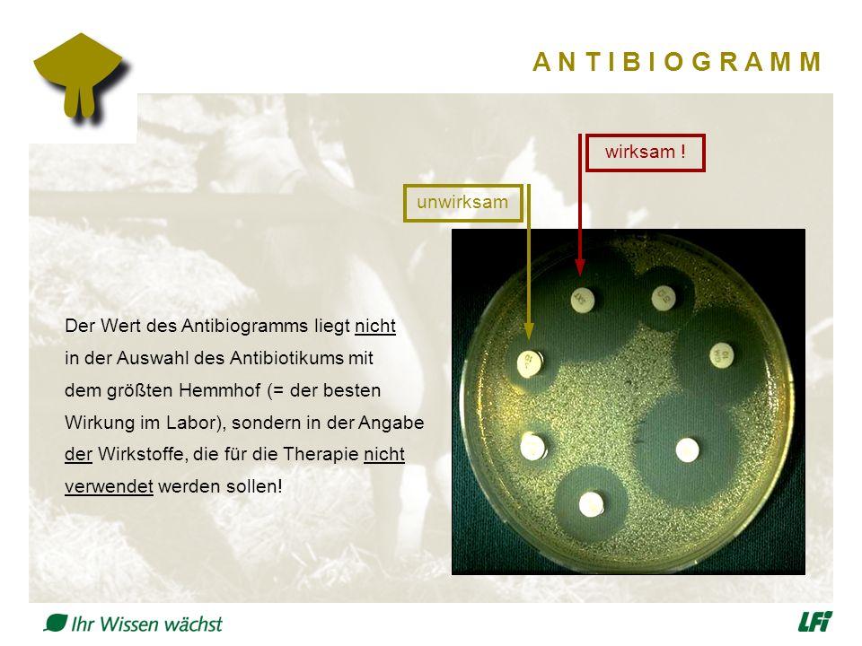 A N T I B I O G R A M M Der Wert des Antibiogramms liegt nicht in der Auswahl des Antibiotikums mit dem größten Hemmhof (= der besten Wirkung im Labor), sondern in der Angabe der Wirkstoffe, die für die Therapie nicht verwendet werden sollen.
