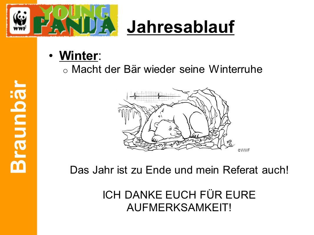 Braunbär Jahresablauf Winter: o Macht der Bär wieder seine Winterruhe Das Jahr ist zu Ende und mein Referat auch! ICH DANKE EUCH FÜR EURE AUFMERKSAMKE
