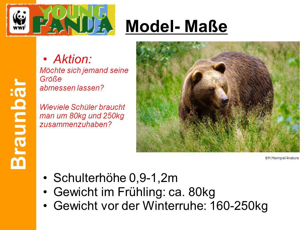 Braunbär Model- Maße Aktion: Möchte sich jemand seine Größe abmessen lassen? Wieviele Schüler braucht man um 80kg und 250kg zusammenzuhaben? Schulterh