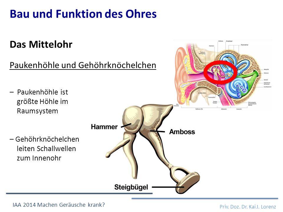 – Paukenhöhle ist größte Höhle im Raumsystem – Gehöhrknöchelchen leiten Schallwellen zum Innenohr Das Mittelohr Paukenhöhle und Gehöhrknöchelchen Priv.