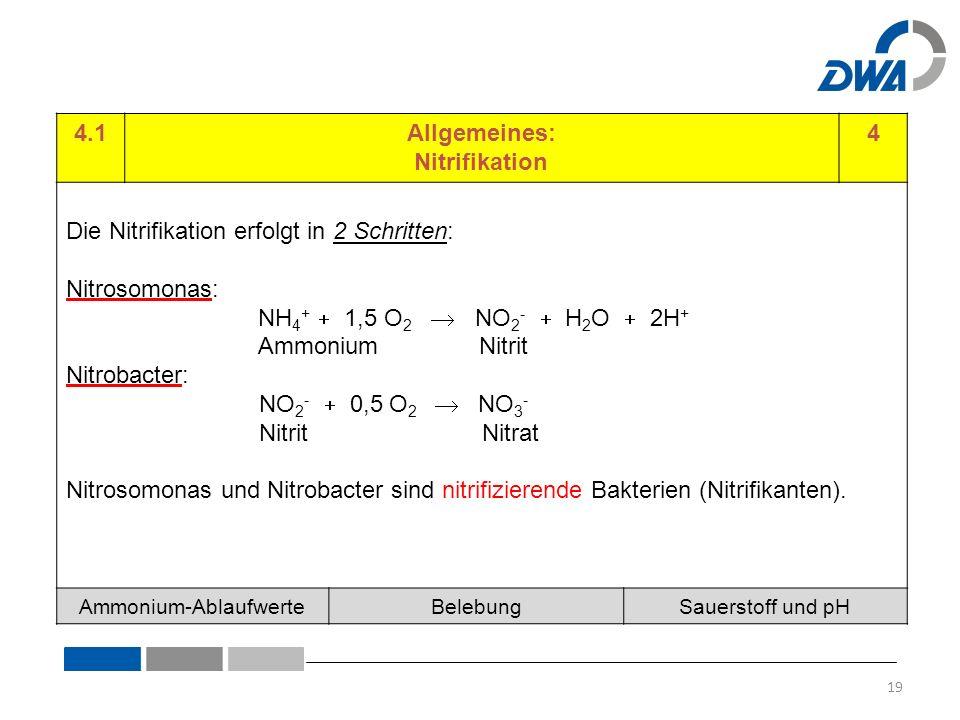 4.1Allgemeines: Nitrifikation 4 Die Nitrifikation erfolgt in 2 Schritten: Nitrosomonas: NH 4 +  1,5 O 2  NO 2 -  H 2 O  2H + Ammonium Nitrit Nitrobacter: NO 2 -  0,5 O 2  NO 3 - Nitrit Nitrat Nitrosomonas und Nitrobacter sind nitrifizierende Bakterien (Nitrifikanten).