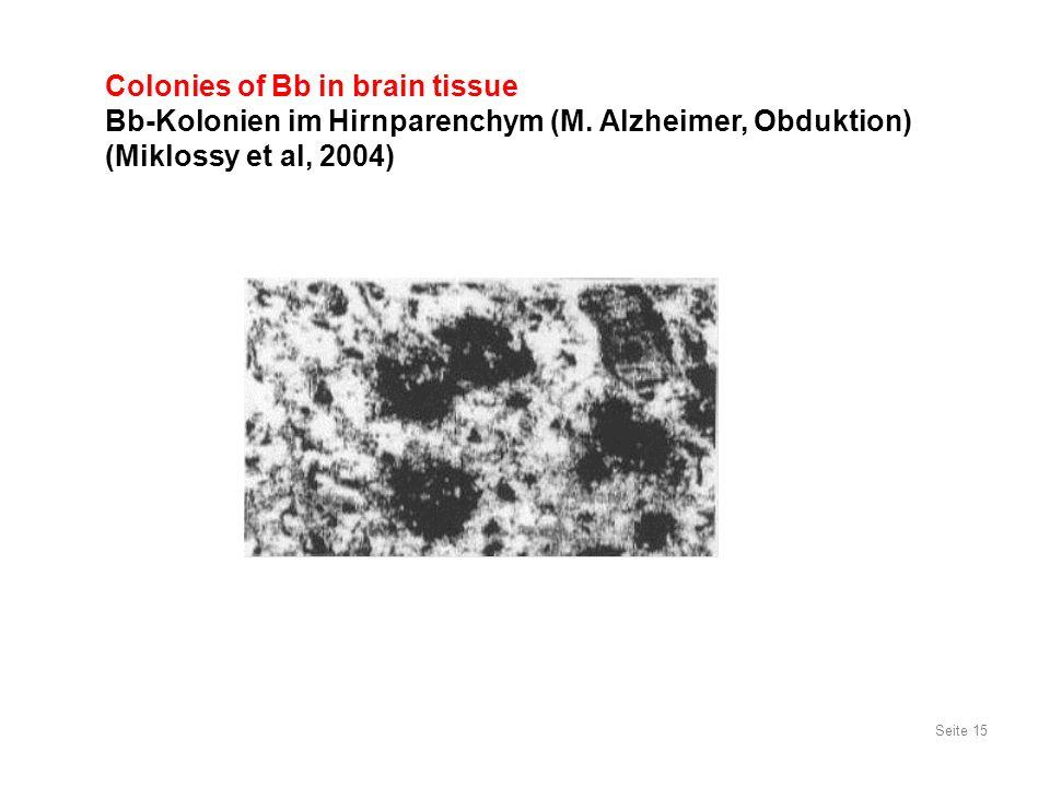 Seite 15 Colonies of Bb in brain tissue Bb-Kolonien im Hirnparenchym (M. Alzheimer, Obduktion) (Miklossy et al, 2004)