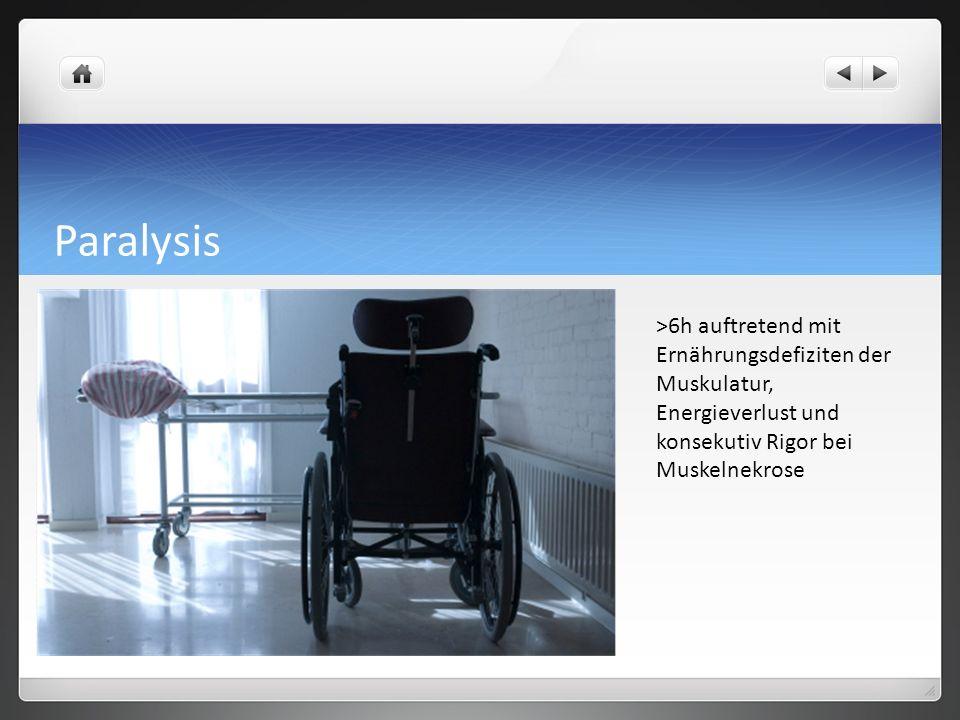 Paralysis >6h auftretend mit Ernährungsdefiziten der Muskulatur, Energieverlust und konsekutiv Rigor bei Muskelnekrose