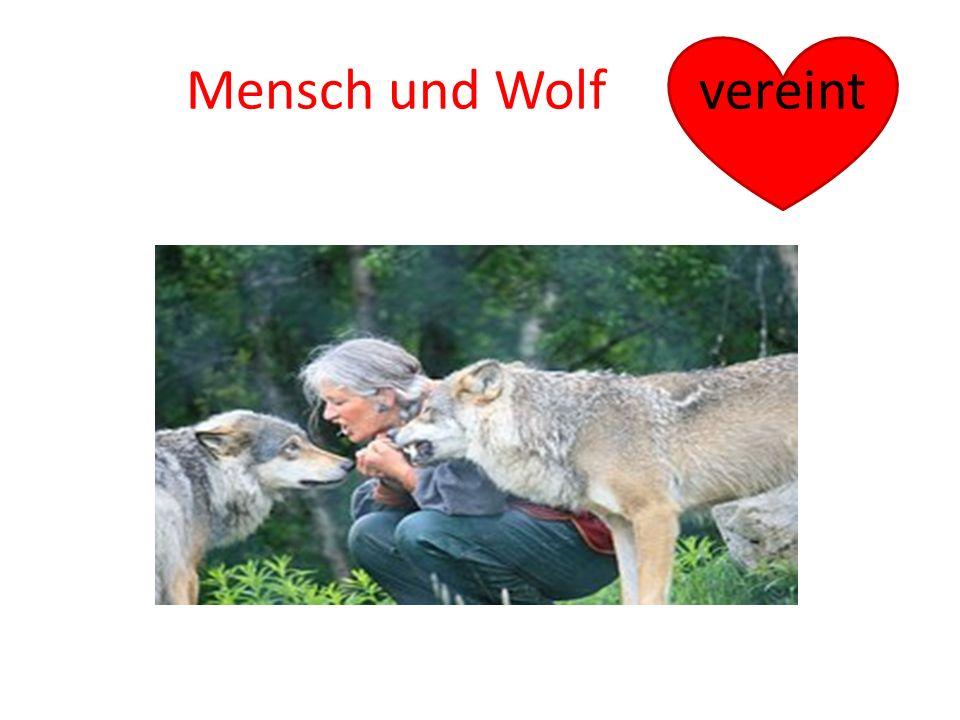Mensch und Wolf vereint