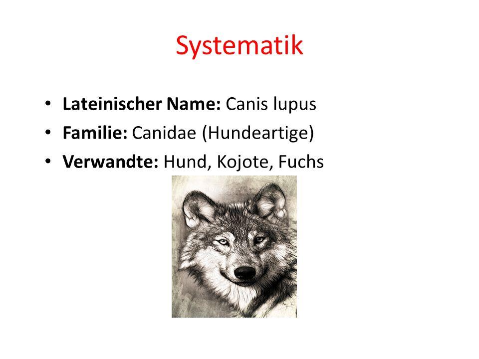 Mensch gegen Wolf