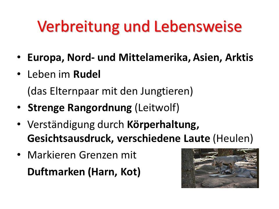 Rückkehr der Wölfe in Österreich Vor ca.
