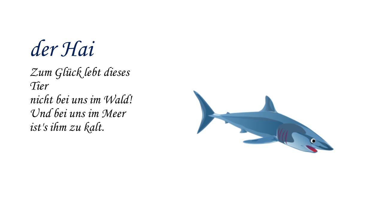 der Hai Zum Glück lebt dieses Tier nicht bei uns im Wald! Und bei uns im Meer ist's ihm zu kalt.