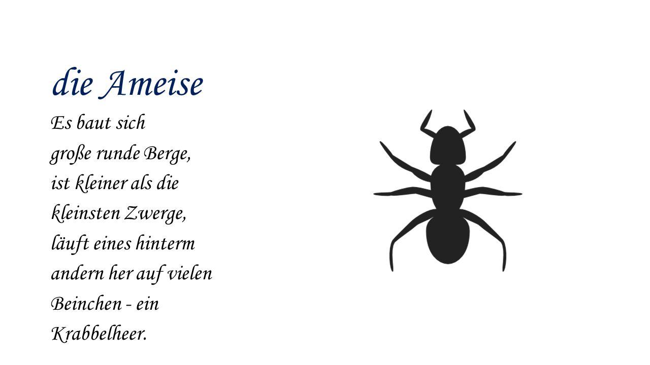 die Ameise Es baut sich große runde Berge, ist kleiner als die kleinsten Zwerge, läuft eines hinterm andern her auf vielen Beinchen - ein Krabbelheer.