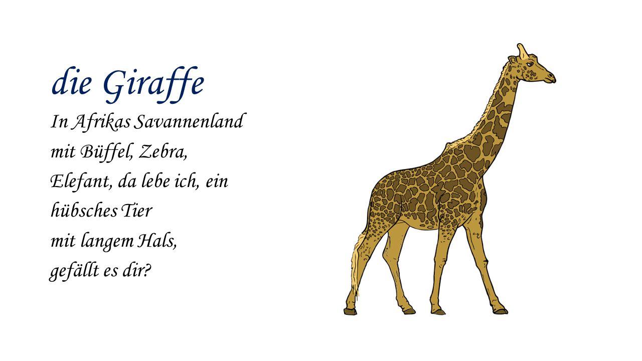 die Giraffe In Afrikas Savannenland mit Büffel, Zebra, Elefant, da lebe ich, ein hübsches Tier mit langem Hals, gefällt es dir