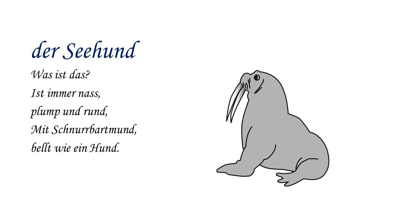 der Seehund Was ist das? Ist immer nass, plump und rund, Mit Schnurrbartmund, bellt wie ein Hund.