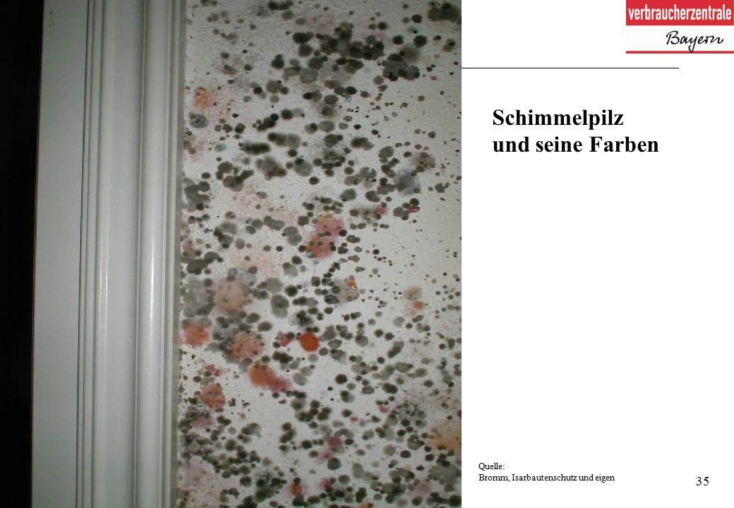 35 Schimmelpilz und seine Farben Quelle: Bromm, Isarbautenschutz und eigen