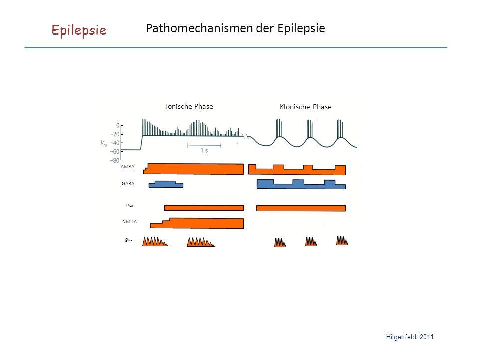 Epilepsie Hilgenfeldt 2011 AMPA GABA NMDA g Ca g Na Tonische Phase Klonische Phase Pathomechanismen der Epilepsie
