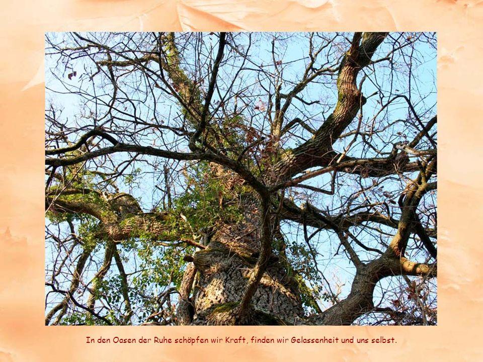 Bäume haben etwas wesentliches gelernt: nur wer einen festen Stand hat und trotzdem beweglich ist überlebt die starken Stürme.