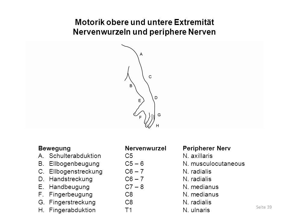 Motorik obere und untere Extremität Nervenwurzeln und periphere Nerven Seite 39 BewegungNervenwurzelPeripherer Nerv A.SchulterabduktionC5N. axillaris