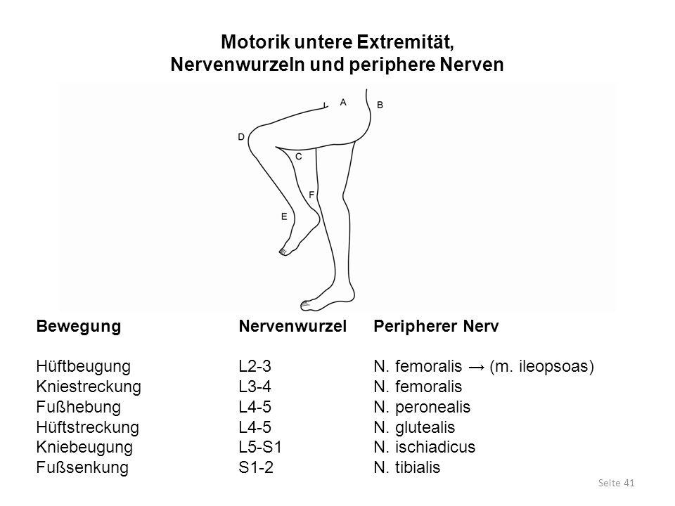 Motorik untere Extremität, Nervenwurzeln und periphere Nerven BewegungNervenwurzelPeripherer Nerv HüftbeugungL2-3N. femoralis → (m. ileopsoas) Kniestr