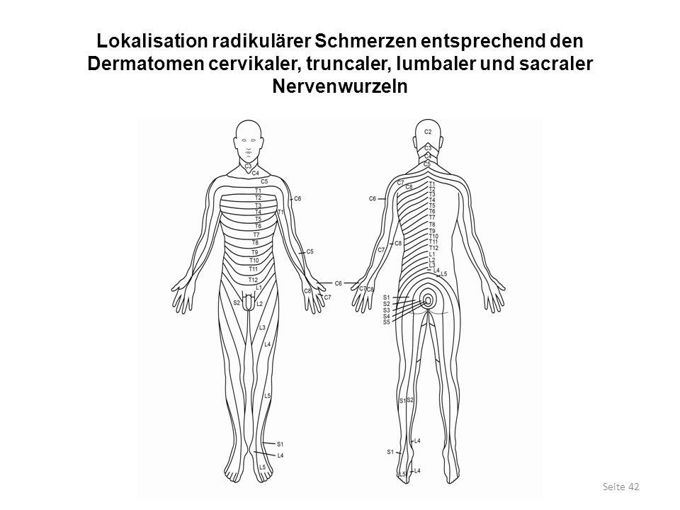 Lokalisation radikulärer Schmerzen entsprechend den Dermatomen cervikaler, truncaler, lumbaler und sacraler Nervenwurzeln Seite 42