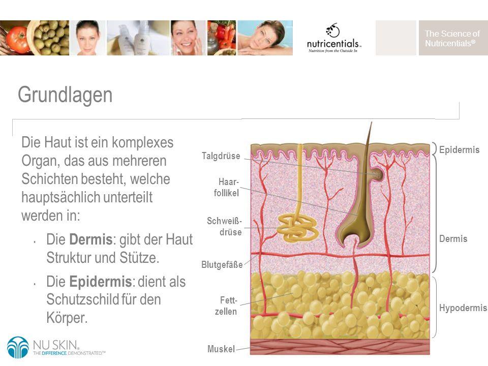 The Science of Nutricentials ® Grundlagen Feuchtigkeitsbarriere: Zwischen den Keratinozyten (Hautzellen) im Stratum corneum (äußere Schicht der Epidermis) befinden sich epidermale Lipide (Keramide, Fettsäuren und Lipide), die als Zement (oder Mörtel) zwischen den Hautzellen (Bausteinen) wirken.