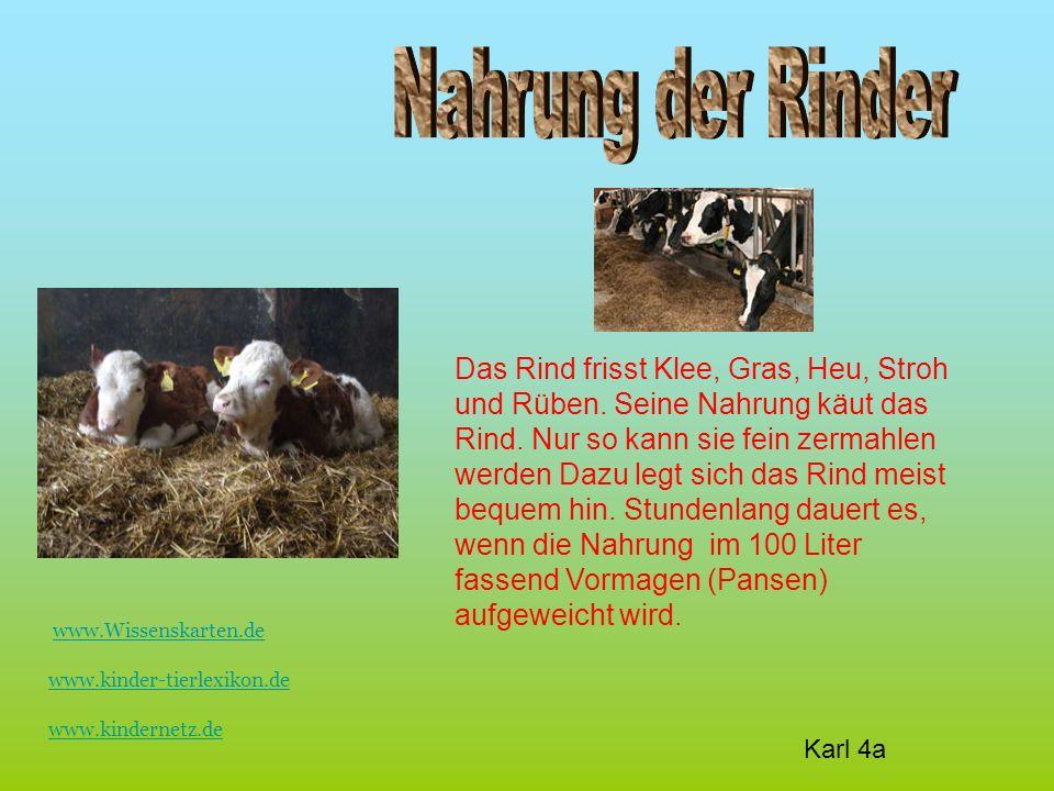 Das Rind frisst Klee, Gras, Heu, Stroh und Rüben. Seine Nahrung käut das Rind.