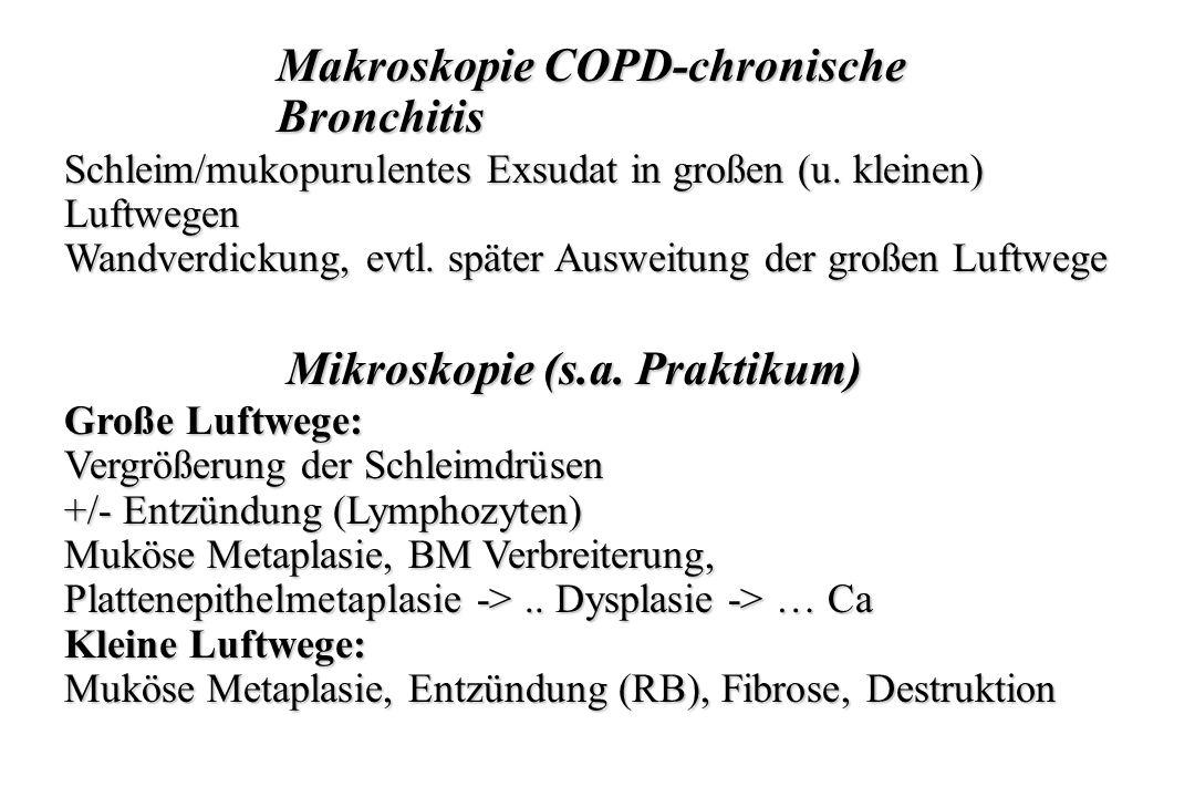 Makroskopie COPD-chronische Bronchitis Schleim/mukopurulentes Exsudat in großen (u. kleinen) Luftwegen Wandverdickung, evtl. später Ausweitung der gro