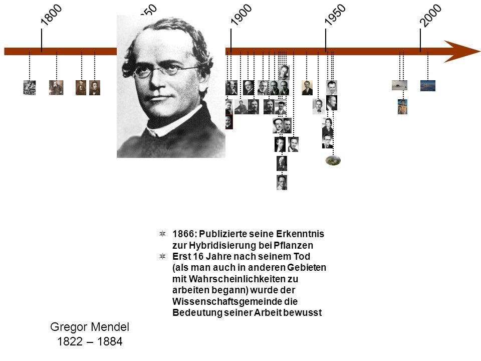 1900 1850 1950 20001800 Gregor Mendel 1822 – 1884  1866: Publizierte seine Erkenntnis zur Hybridisierung bei Pflanzen  Erst 16 Jahre nach seinem Tod (als man auch in anderen Gebieten mit Wahrscheinlichkeiten zu arbeiten begann) wurde der Wissenschaftsgemeinde die Bedeutung seiner Arbeit bewusst